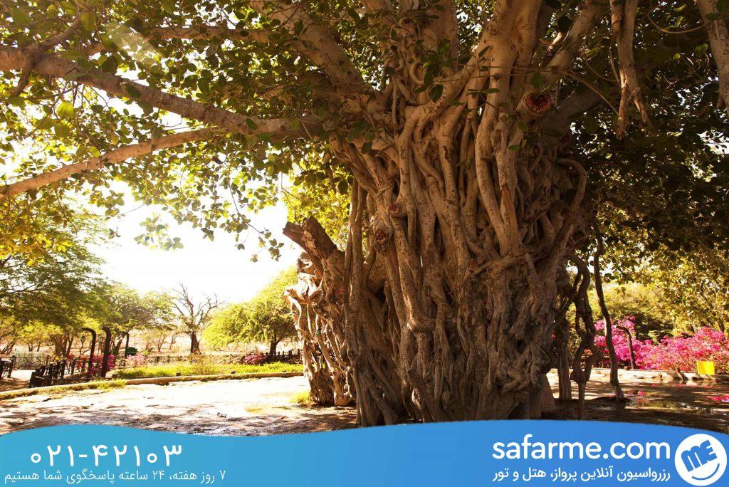 درخت انجیر
