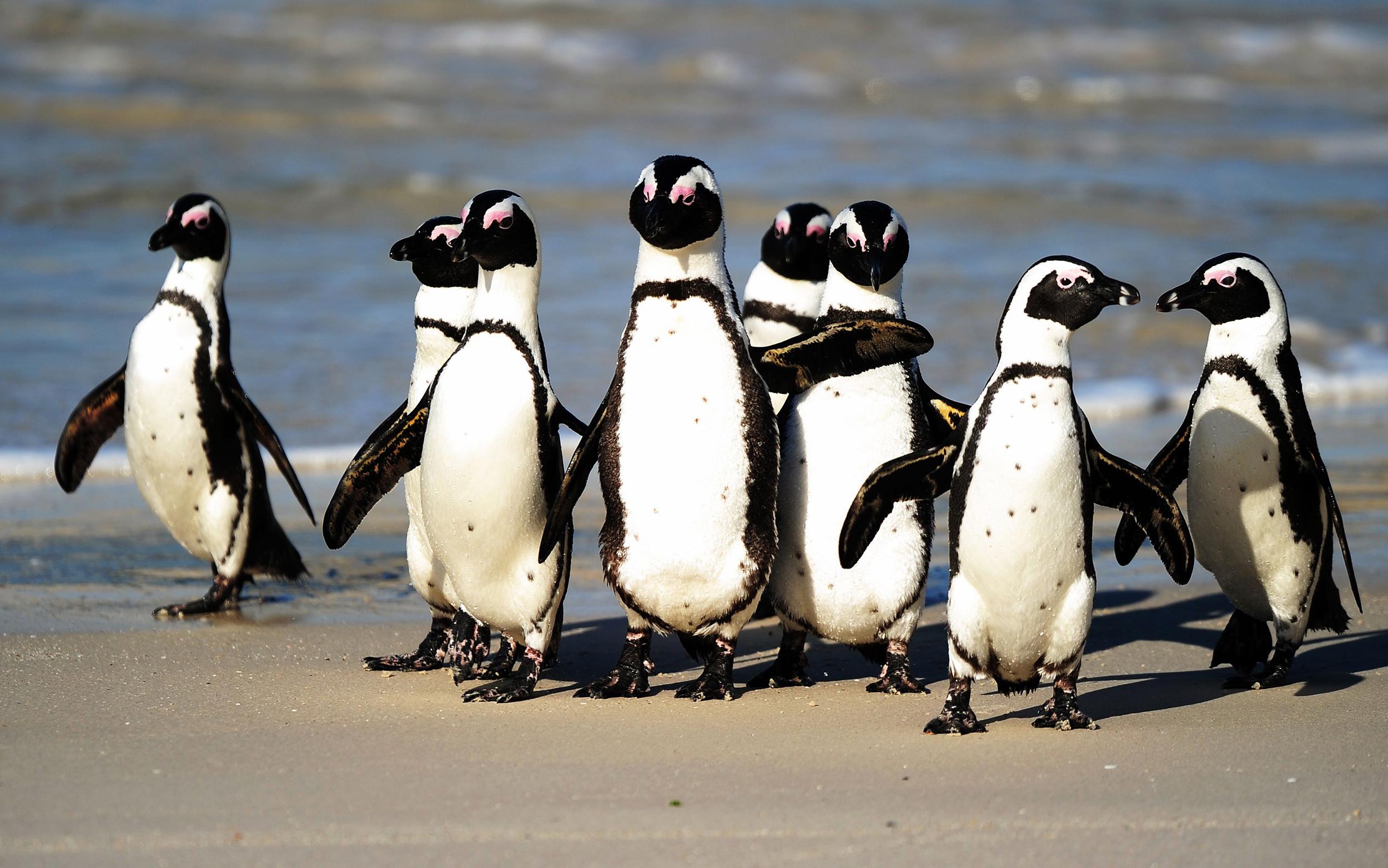 تماشای پنگوئن ها