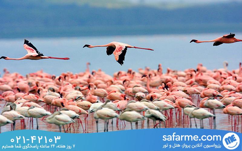 دریاچه ناکورو (Nakuru Lake)