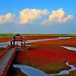 ساحل سرخ چین، ساحلی بدون شن و ماسه