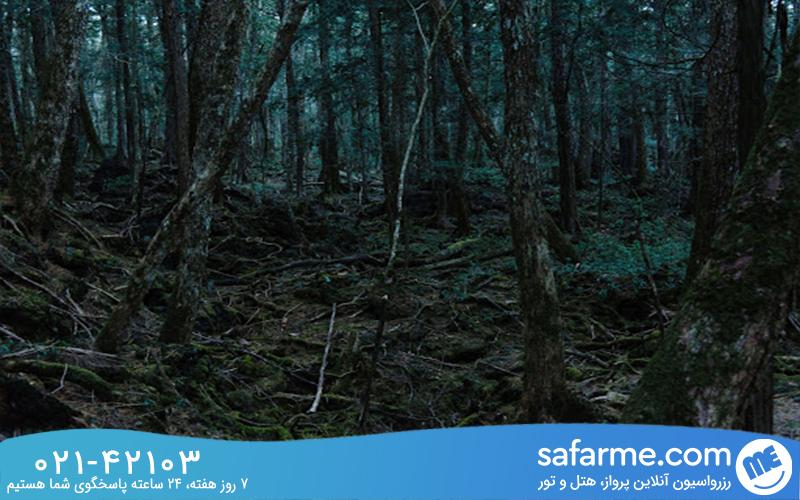 تحقیق علمی درباره جنگل جیغ درینگ
