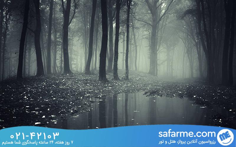 چه قتل هایی در این جنگل اتفاق افتاده است؟