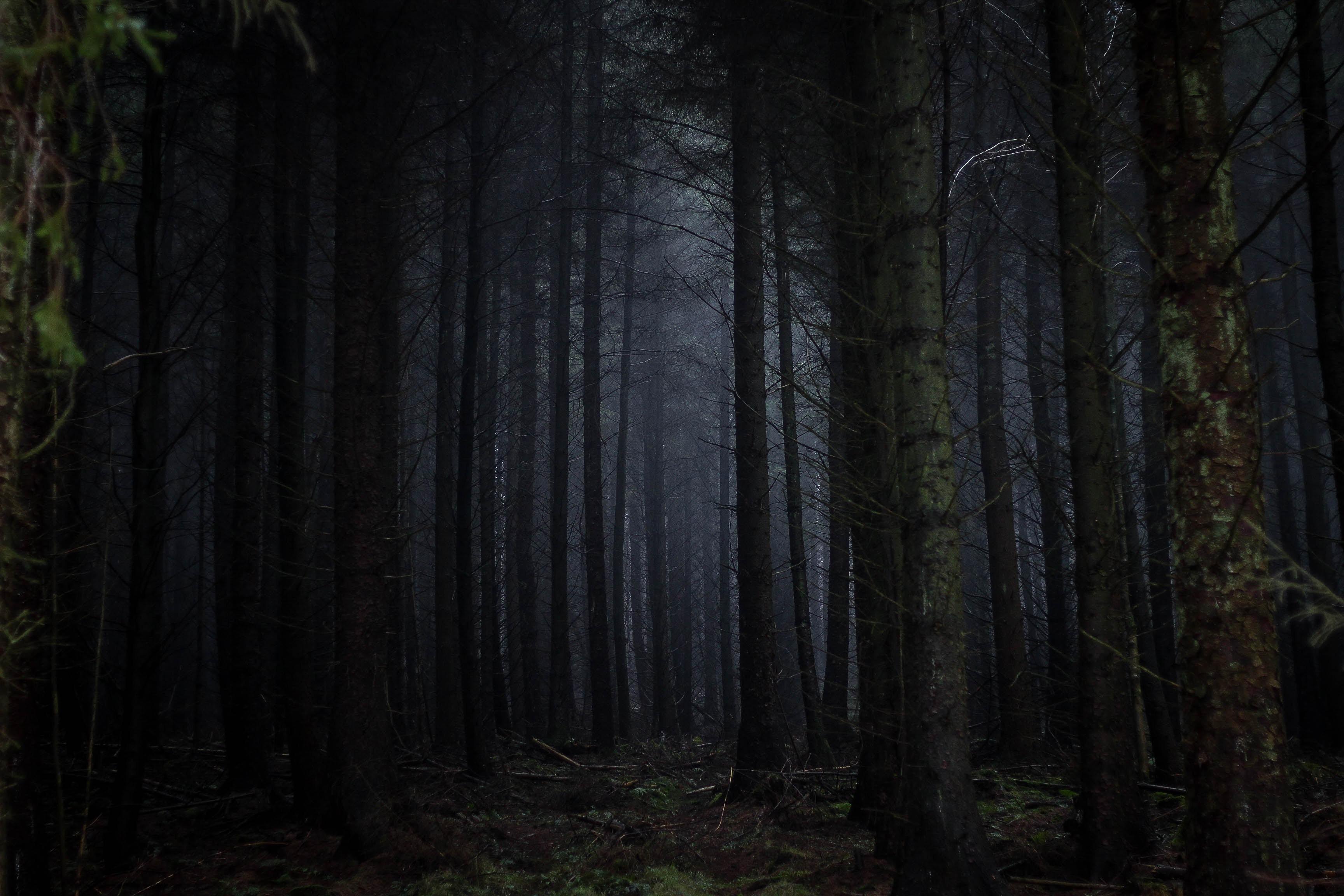 جنگل جیغ درینگ وودز در انگلستان، جاذبه ای ترسناک اما زیبا