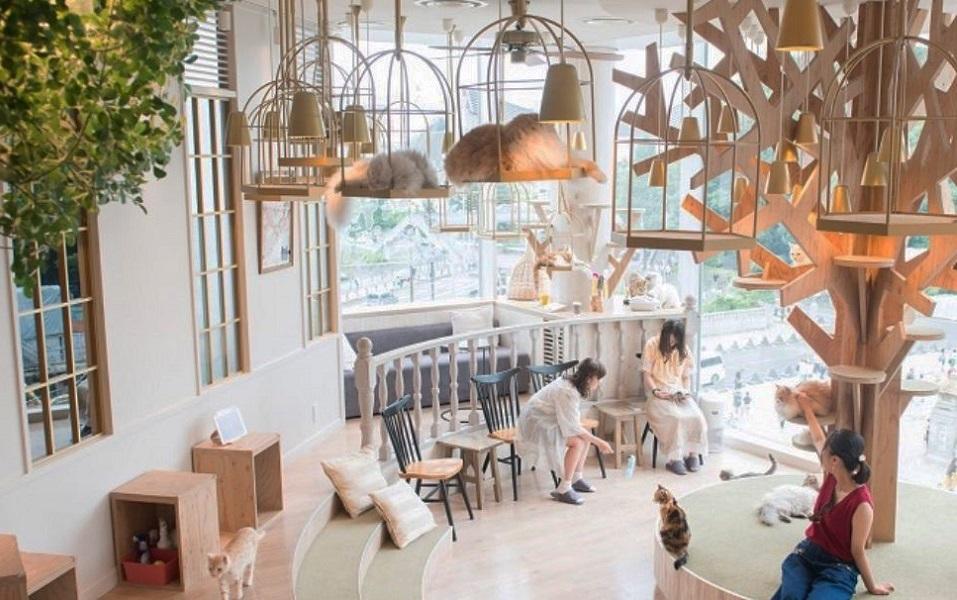 کافه هایی برای گربه ها - ژاپن