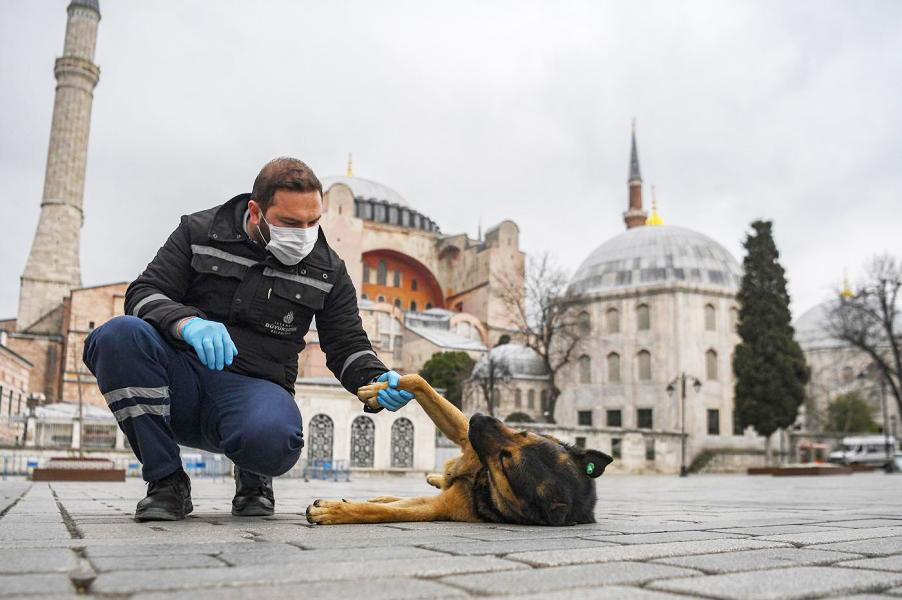حیوان دوستی مردم ترکیه